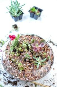 Amazing Diy Succulents Indoor Decorations 10