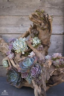 Amazing Diy Succulents Indoor Decorations 20