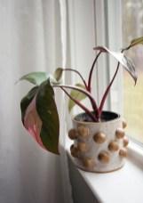 Amazing Easy Low Light Houseplants Indoor Decor 18