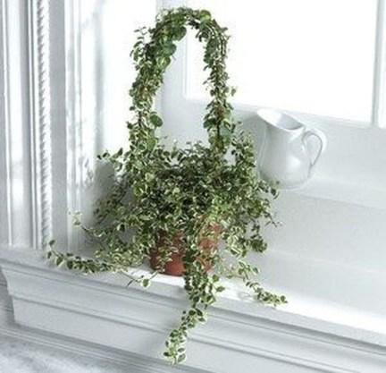 Amazing Easy Low Light Houseplants Indoor Decor 21