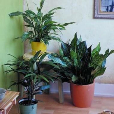 Amazing Easy Low Light Houseplants Indoor Decor 35