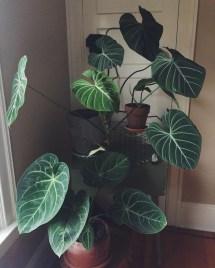 Amazing House Plants Indoor Decor Ideas Must 04
