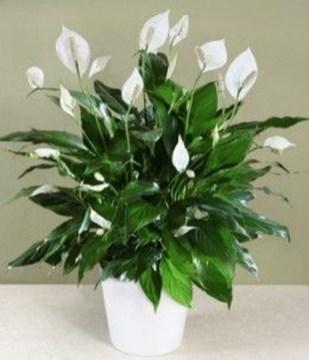 Amazing House Plants Indoor Decor Ideas Must 07