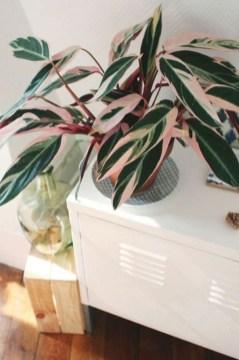 Amazing House Plants Indoor Decor Ideas Must 09