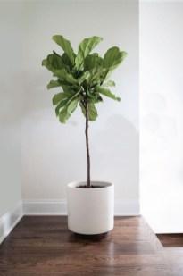 Amazing House Plants Indoor Decor Ideas Must 10