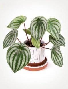 Amazing House Plants Indoor Decor Ideas Must 13