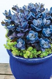 Amazing House Plants Indoor Decor Ideas Must 19