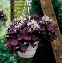 Amazing House Plants Indoor Decor Ideas Must 23
