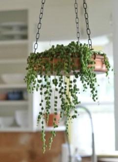 Amazing House Plants Indoor Decor Ideas Must 31