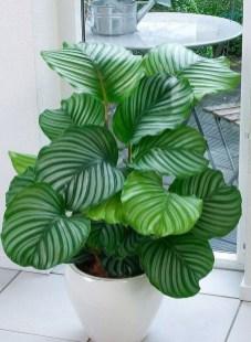 Amazing House Plants Indoor Decor Ideas Must 47