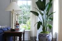 Amazing House Plants Indoor Decor Ideas Must 48
