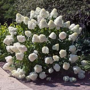 Amazing Low Maintenance Garden Landscaping Ideas 29