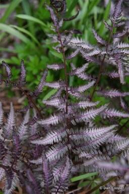 Amazing Low Maintenance Garden Landscaping Ideas 31