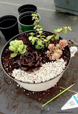 Amazing Succulents Garden Decor Ideas 17