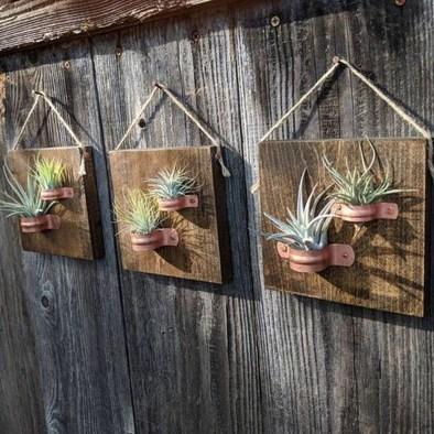 Creative Hanging Air Plants Decor Ideas 07