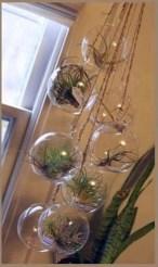 Creative Hanging Air Plants Decor Ideas 11