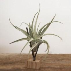 Creative Hanging Air Plants Decor Ideas 13