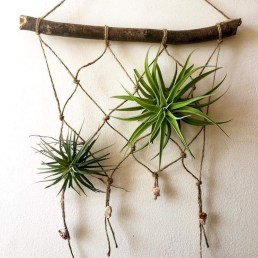 Creative Hanging Air Plants Decor Ideas 20