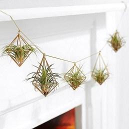 Creative Hanging Air Plants Decor Ideas 23