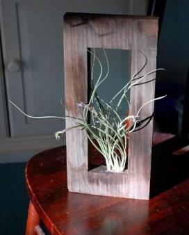 Creative Hanging Air Plants Decor Ideas 24