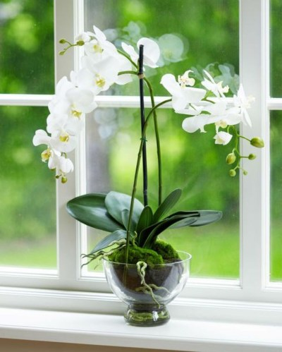 Friendly House Plants For Indoor Decoration 01