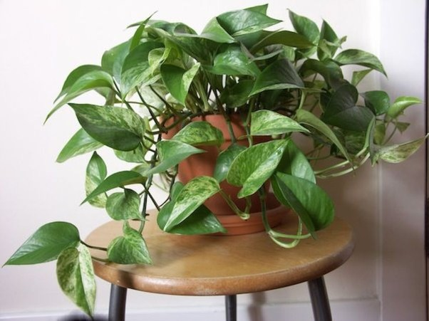 Friendly House Plants For Indoor Decoration 04