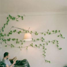 Friendly House Plants For Indoor Decoration 07