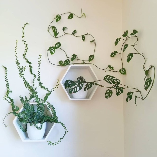 Friendly House Plants For Indoor Decoration 12