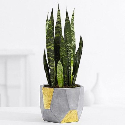 Friendly House Plants For Indoor Decoration 25