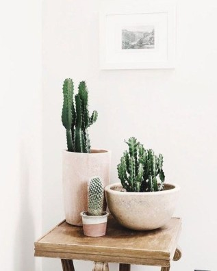 Friendly House Plants For Indoor Decoration 35