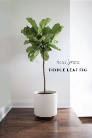 Friendly House Plants For Indoor Decoration 38