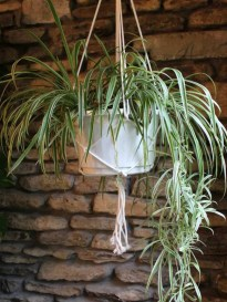 Friendly House Plants For Indoor Decoration 39