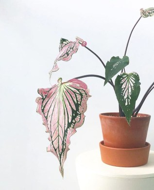 Friendly House Plants For Indoor Decoration 46