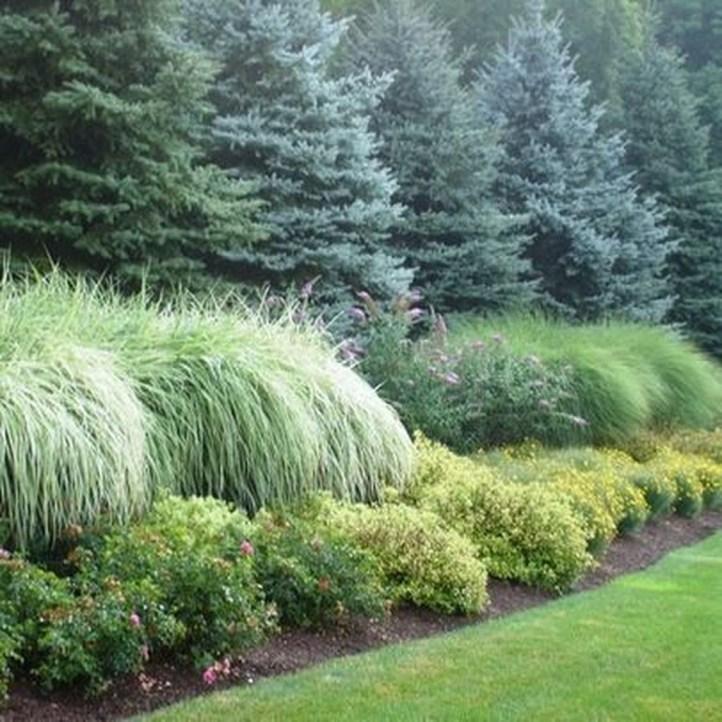 Amazing Evergreen Grasses Landscaping Ideas01