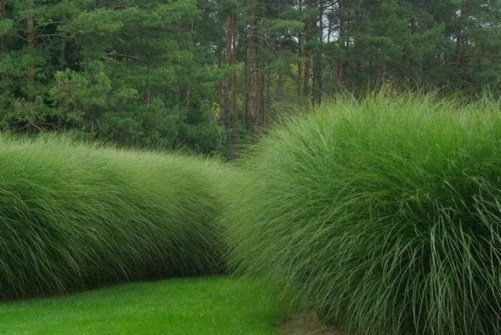 Amazing Evergreen Grasses Landscaping Ideas15