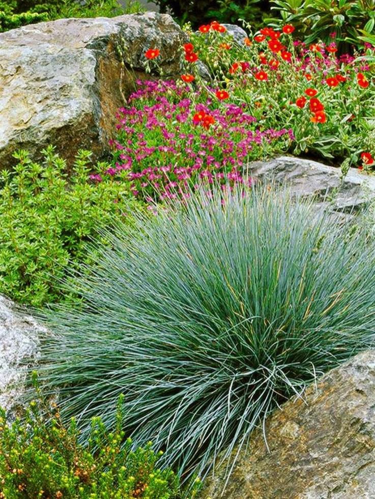 Amazing Evergreen Grasses Landscaping Ideas25