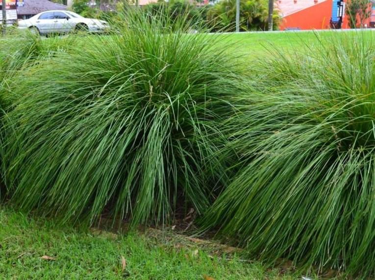 Amazing Evergreen Grasses Landscaping Ideas37