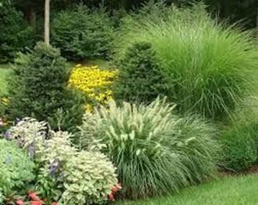 Amazing Evergreen Grasses Landscaping Ideas39
