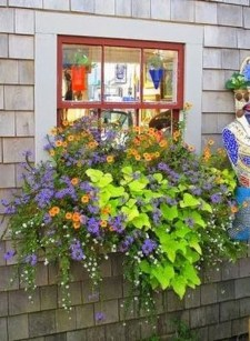 Amazing Windows Flower Boxes Design Ideas Must See05
