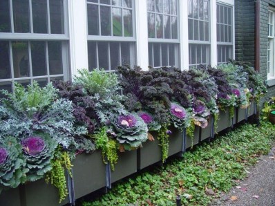 Amazing Windows Flower Boxes Design Ideas Must See08