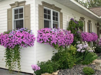 Amazing Windows Flower Boxes Design Ideas Must See13