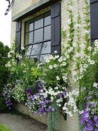 Amazing Windows Flower Boxes Design Ideas Must See34