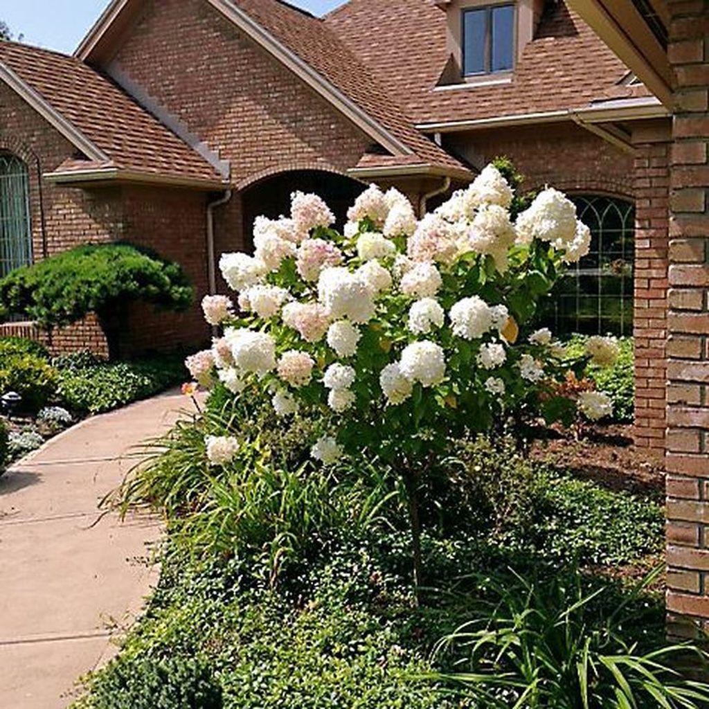 Elegant Colorful Bobo Hydrangea Garden Landscaping Ideas03