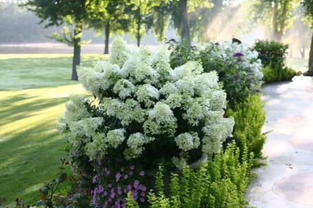 Elegant Colorful Bobo Hydrangea Garden Landscaping Ideas13