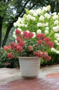 Elegant Colorful Bobo Hydrangea Garden Landscaping Ideas19
