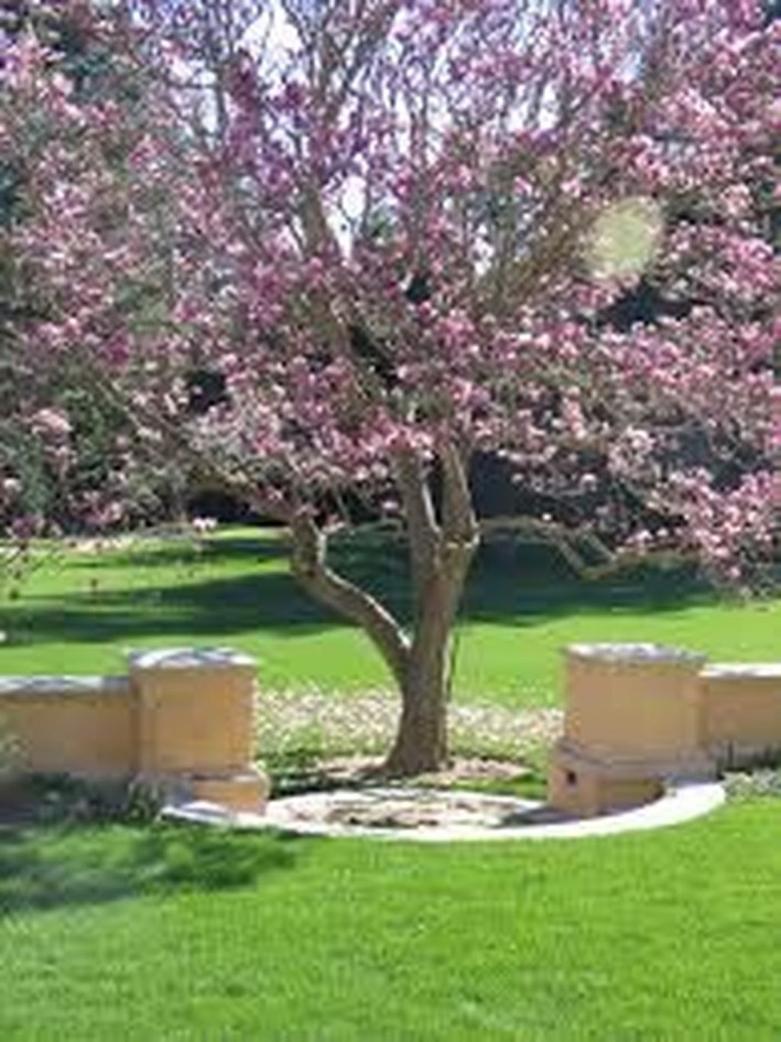 Amazing Big Tree Landscaping Ideas01