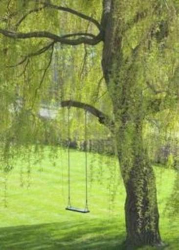 Amazing Big Tree Landscaping Ideas26