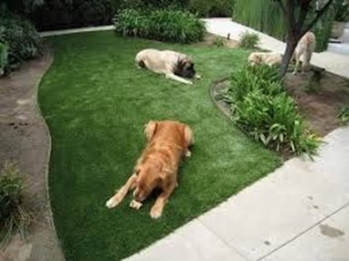 Amazing Grass Landscaping For Home Yard35