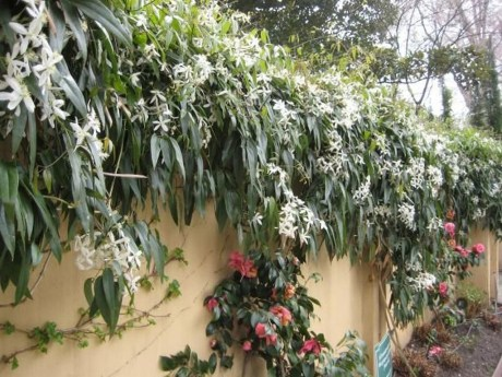 Beautiful Evergreen Vines Ideas For Your Home38