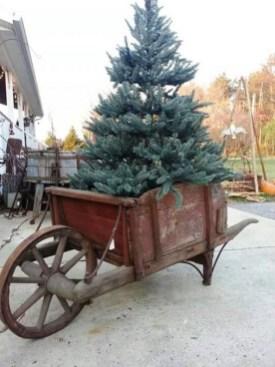 Amazing Outdoor Christmas Trees Ideas 07